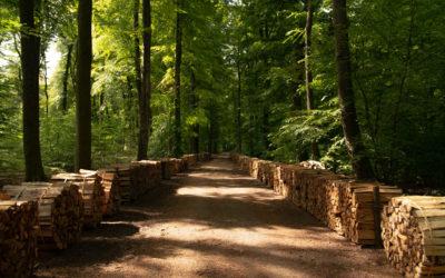 Holzstee / Vente de bois aux enchères